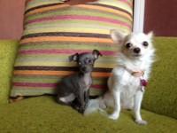 Minnie & Blue
